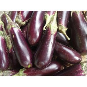 Fresh Purple Brinjal
