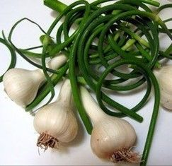 Green Garlic Oleoresin