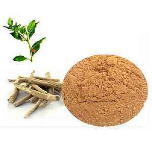 Ashwagandha Extract (Withania sominifera ) Withanolides 1.5%-10%
