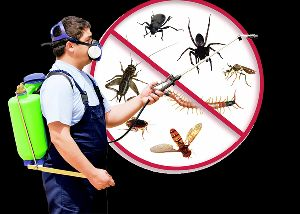 Spider Control Services