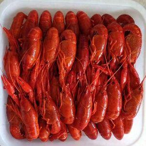 Frozen Lobster 01