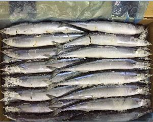 Frozen Saury Fish