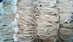 Frozen Squid