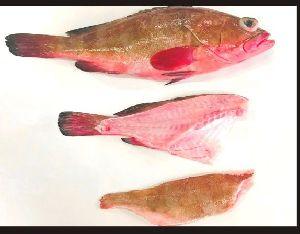 Kooth Fish Fillet