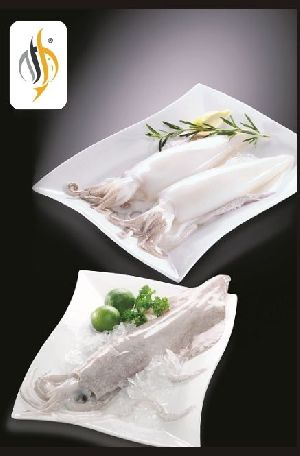 Frozen Squid Fish