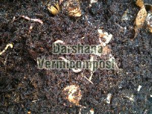 Vermicompost Manure 04