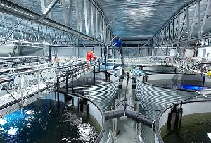 Zero-Discharge Sea Water & Fresh Water Fish & Shrimps Growing Systems