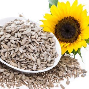 Sunflower Seeds 03