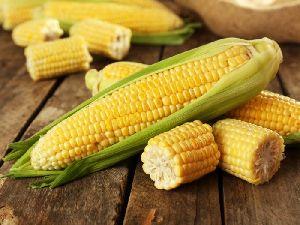 Whole Yellow Corn 03