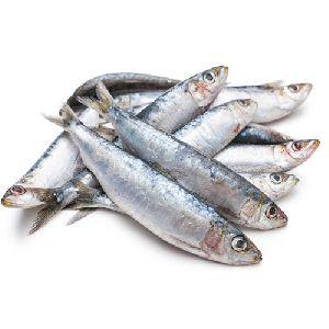 Ayila Fish