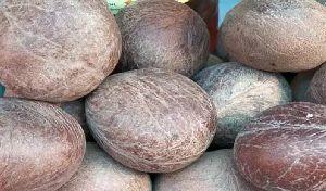Dry Copra Coconut