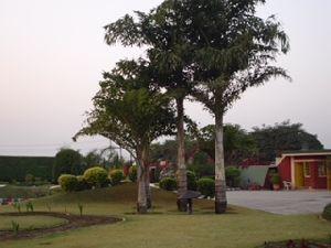 Landscape Development Service 07