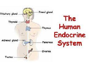 7C Endocrine
