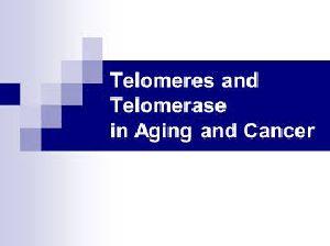 8D Telomere