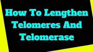8F Telomere