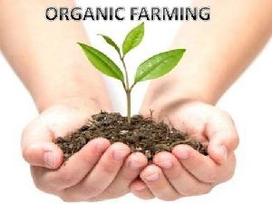 Organic Farming Consultancy Services