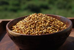 Yellow Sorghum