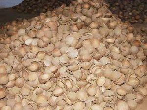 Coconut Shells 01