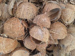 Coconut Shells 03