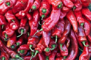 Fresh Kashmiri Red Chilli