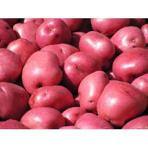 A Grade Red Potato