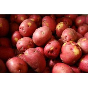 Organic Red Potato