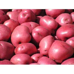 Solanum Tuberosum Red Potato
