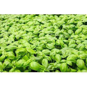 Akadandu Herbal Seed