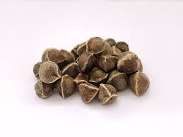 Moringa Herbal Seeds