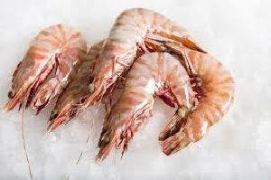 Frozen Shrimps 02