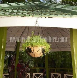 Coir Hanging Planters