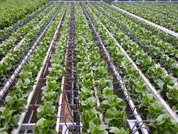 Global Drip Irrigation System