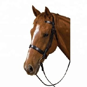 Halter Horse Racing Bridle