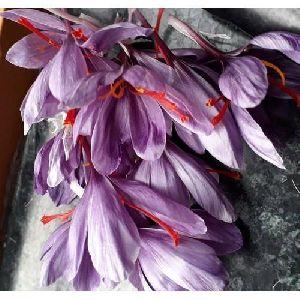 Fresh Saffron Flower Petals