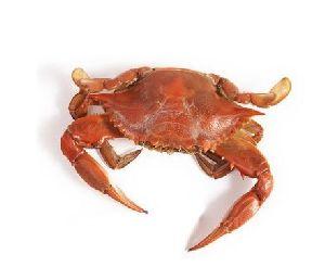 500 Gm  Machchhi Paani Crab