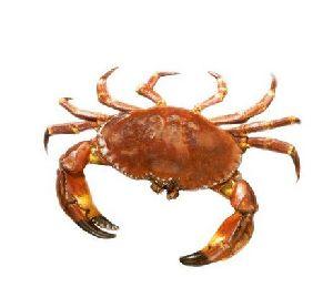 Diwann Best Quality Fresh Crab