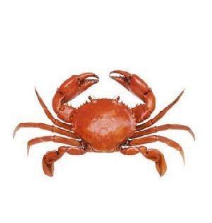 Ennia Best Quality Frozen Crab