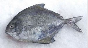 Fishfest Best Of Best Smoked Pomfret Fish