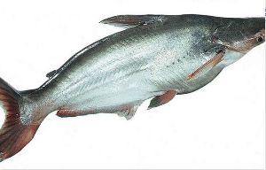Getfish Shining Smoked Basa Fish