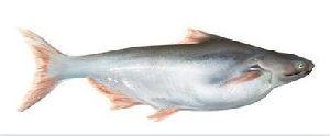 Getfish Unique Fresh Basa Fish