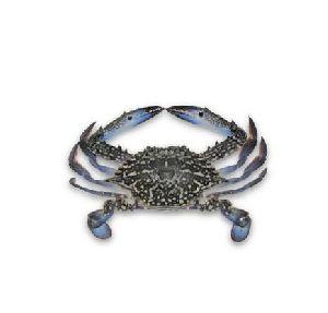 Likhaa Large Fresh Crab