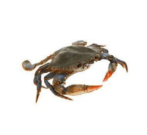 Mikaa Best Of Best Frozen Crab