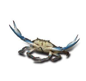 Sikhaa Good And Fresh Crab