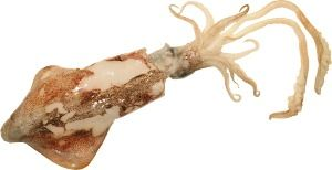 Sikhaa Good And Fresh Squid