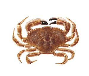 Sunteeks Unique Smoked Crab