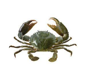 Yumfillis Good And Dried Crab