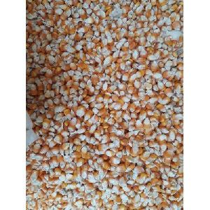 Pure Maize Cattle Feed