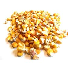 Raw Maize Cattle Feed