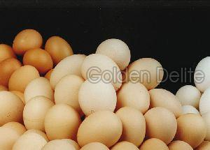 Poultry Chicken Eggs