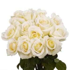 Fresh White Roses